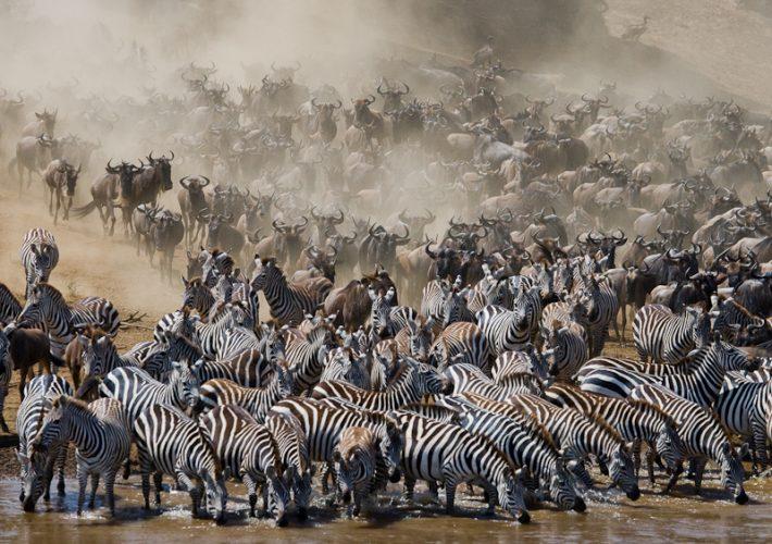 マサイマラ国立保護区で見られる野生動物の大移動