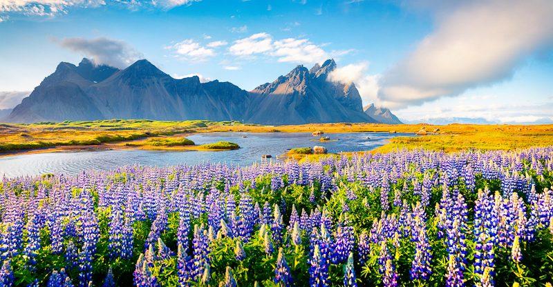 レイキャヴィク・スリーフヌカギグル火山と麓に広がる花園
