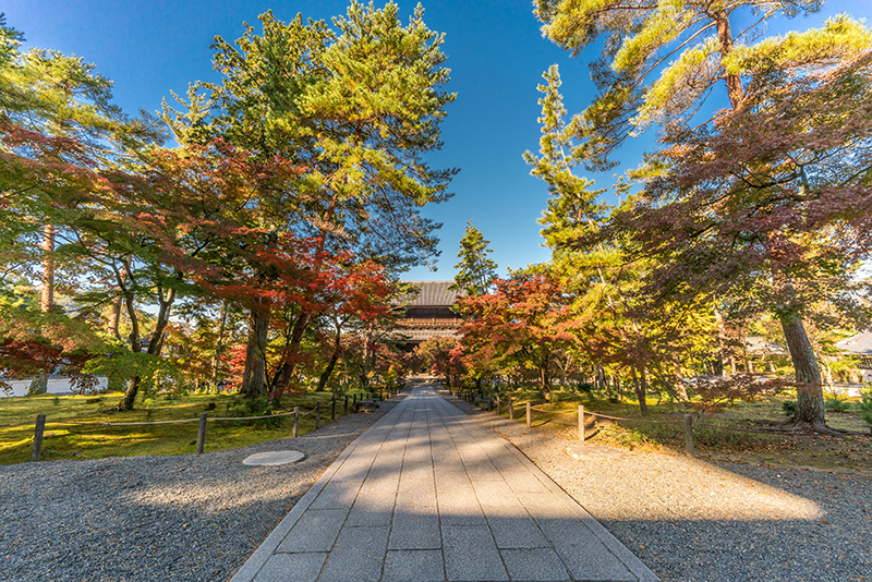 今年おすすめの日本の絶景紅葉名所8選 - 京都・永観堂禅林寺