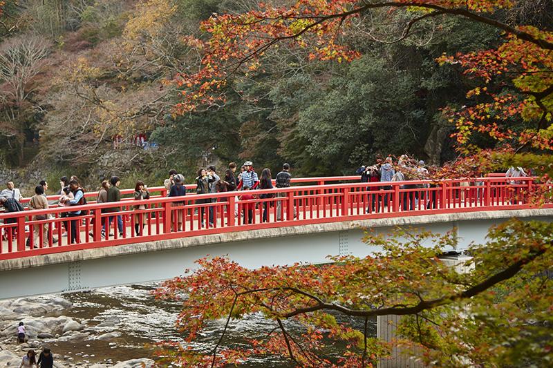 今年おすすめの日本の絶景紅葉名所8選 - 愛知県・香嵐渓