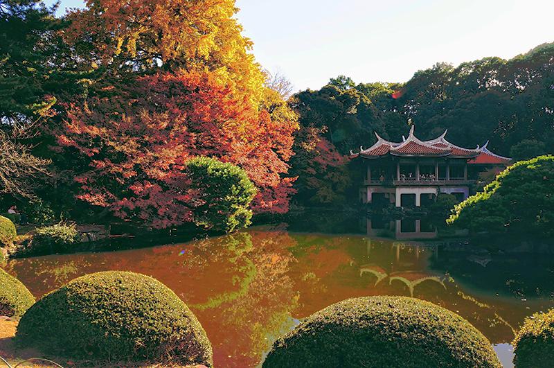 今年おすすめの日本の絶景紅葉名所8選 - 東京・新宿御苑