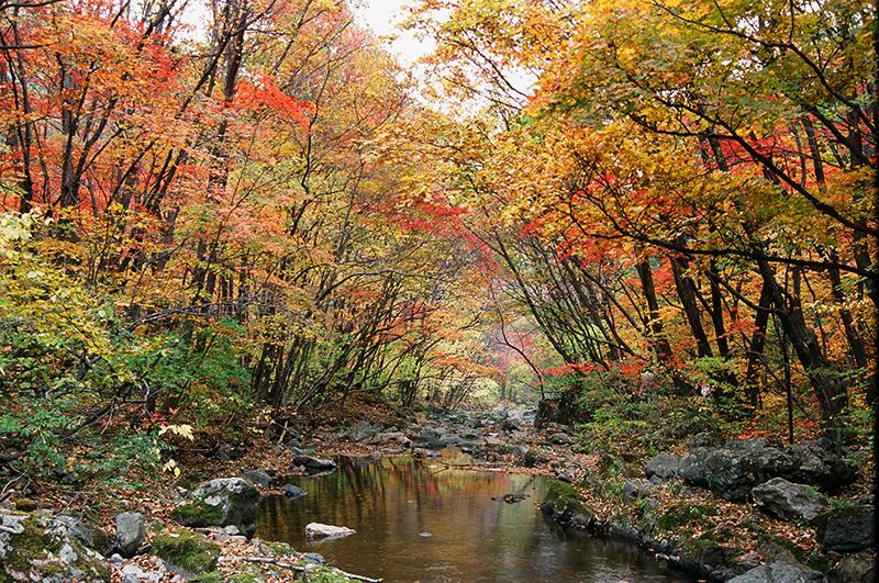 この秋絶対に訪れたい世界の紅葉名所10選 - 光霧山、中国・四川省