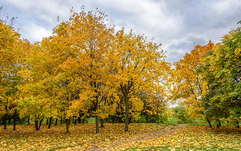 この秋絶対に訪れたい世界の紅葉名所10選 - コローメンスコエ、ロシア・モスクワ