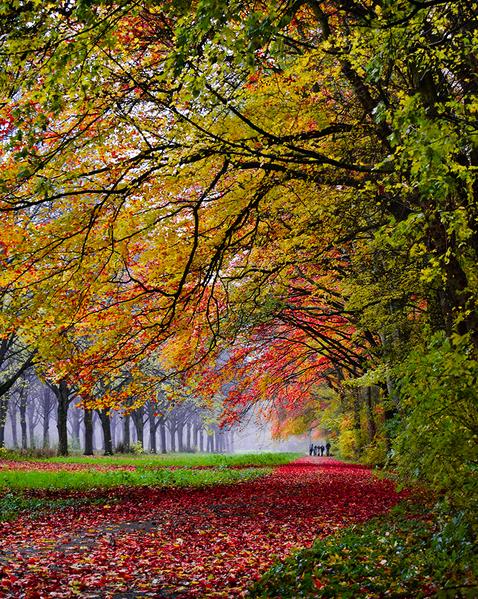 この秋絶対に訪れたい世界の紅葉名所10選 - アムステルダム、オランダ