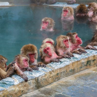 DEST_JAPAN_HAKODATE_THEME_SNOW MONKEYS-shutterstock-premier_687191995_Universal_Within usage period_32144