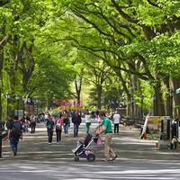 ヴァイスロイ セントラル パーク ニューヨーク
